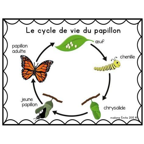 cycle de vie papillon sciences animaux pinterest