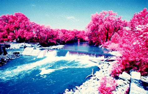 pink forest wallpaper gallery