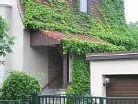 Kletterpflanzen Immergrün Winterhart : garten kletterpflanzen winterhart pflanze kletterpflanze ~ Michelbontemps.com Haus und Dekorationen