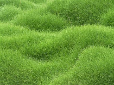 Herbe, Champ, Vert, Texture, Fleur, Prairie