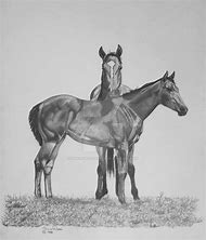 Best Horse Drawings