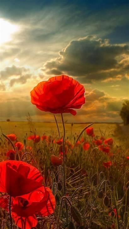 Samsung Galaxy Sunlight Grand Poppy Poppies Field
