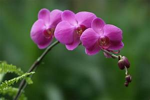 Orchid Flower Picture HD – WeNeedFun