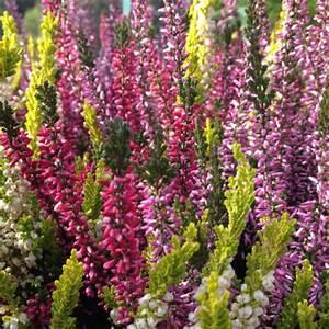 Plante Ombre Exterieur : plantes d ext rieur jardiland ~ Carolinahurricanesstore.com Idées de Décoration