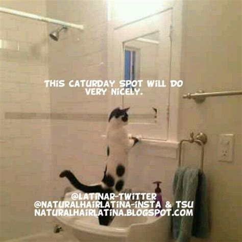 good morning  caturday funny cute pets animals