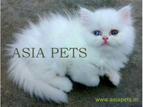 cat for price cats price in india about animals