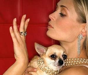 The pet rich list - the world's millionaire mutts and ...