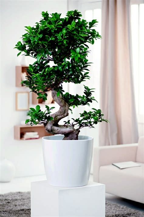 Pflanzen Im Wohnzimmer by 99 Great Ideas To Display Houseplants Indoor Plants