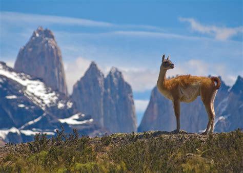 Visit Torres Del Paine National Park Chile Audley Travel