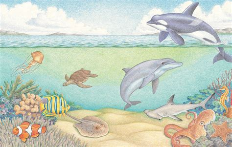 underwater world learn  draw sea creatures book
