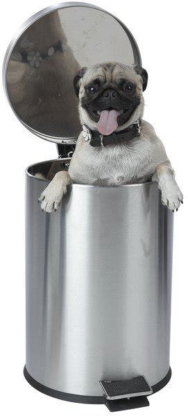 dog  stop knocking   trash  pets