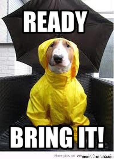 Rain Memes - rain dog