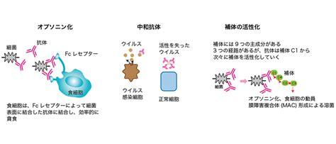 細胞 性 免疫