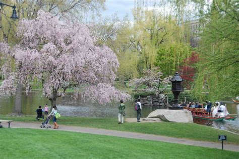visit  boston public garden caterpickles