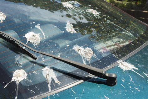 Close Up Bird Droppings Back Window Car Stock Photo