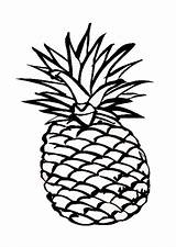 Pineapple Outline Hawaiian Drawing Coloring Smooth Clipart Cayenne Cartoon Pages Delicious Cliparts Sheet Clip Characters Template Clipartmag Drawings sketch template