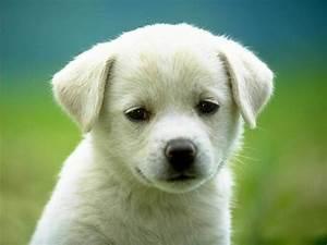 puppy 3 wallpaper