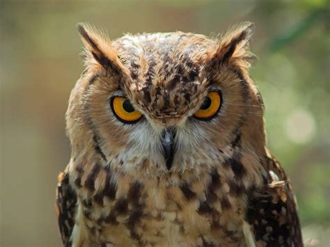 30 charming and stunning owl pictures that will inspire