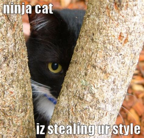 Ninja Cat  Funny And Cute Cats Gallery