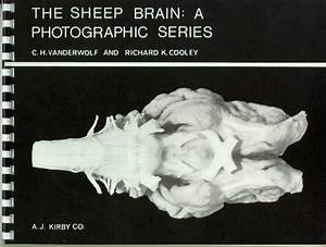 Sheep Brain Dissection Guides