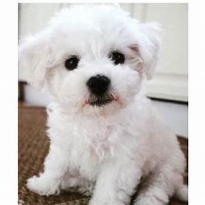 welche rassen sind die hunde bilder hund hunderasse