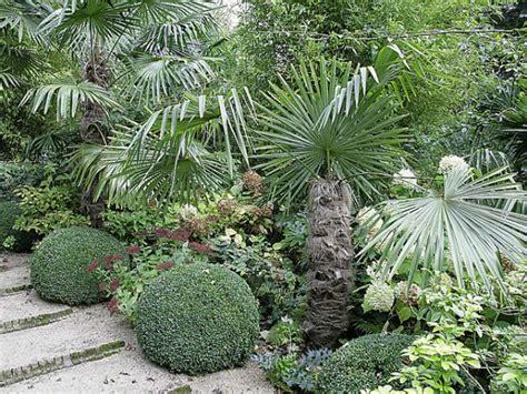 plantation d un palmier en pot la plantation du palmier chanvre