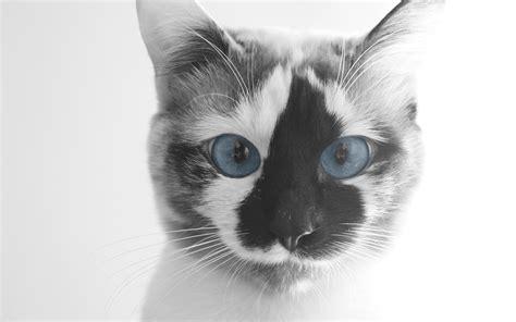 Funny Cat Face Hd Hd Desktop Wallpapers 4k Hd