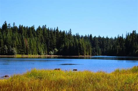 timothy lake cabins facility details arm timothy lake cground or