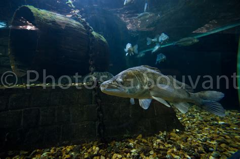 aquarium de touraine horaires aquarium de touraine photographe de l afp agence presse
