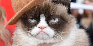 Grumpy Cat - Pictures, Breed, Personality, History ...