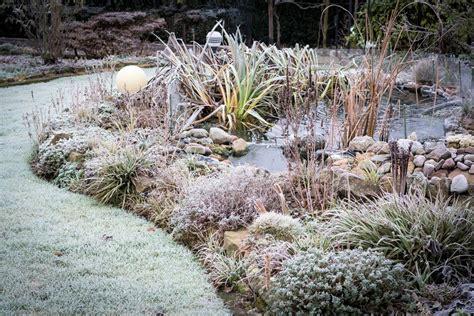 Garten Pflanzen Januar by Die Besten Gartentipps Im Dezember
