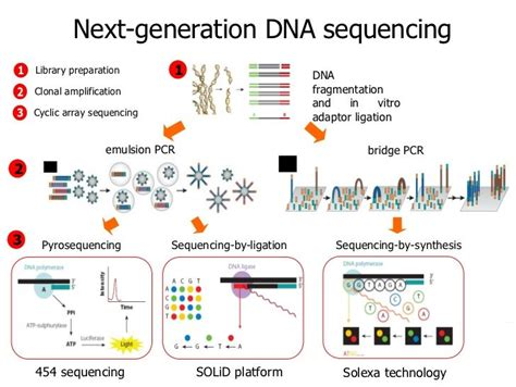 Next Sequencing Illumina Introduction To Next Generation Sequencing Molecular