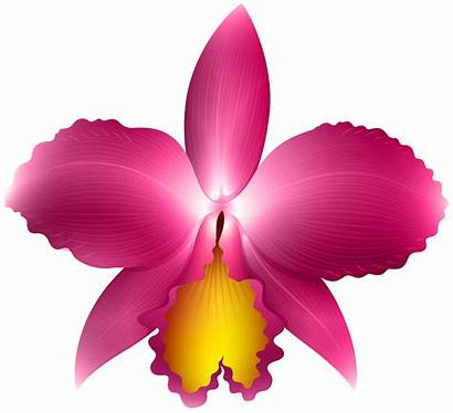 Orchid Clip Transparent Clipart Flowers Yopriceville Previous