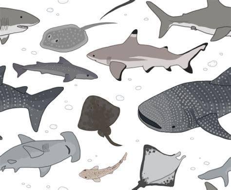 Shark Pattern