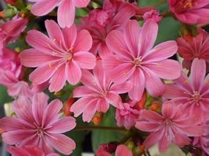 Pink Flowers And Their Names 1 Desktop Wallpaper ...