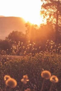 Beerdigung Schöne Ideen : sonne und wiese wundersch nes naturbild beerdigung pinterest sonnenuntergang sonne und ~ Eleganceandgraceweddings.com Haus und Dekorationen