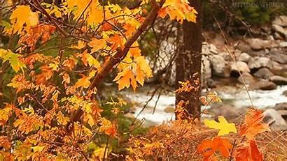 Autumn Fall Nature Landscape Leaves Beauty Gifs