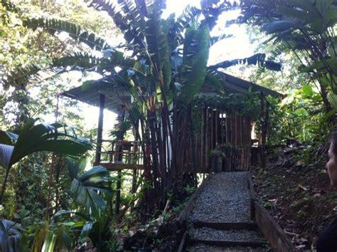 jungle farm la loma jungle lodge and chocolate farm panama isla