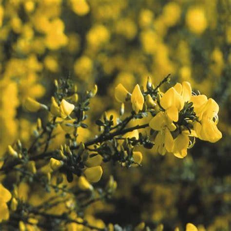 top 10 bloemen vergelijk de top 7 bloemen bezorgen en bloemen bestellen