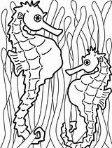 Seaweed Coloring Pages Seahorse Templates Food Kelp Outline Painting Catch Hang Onto Colouring Sea Printable Play Print Cliparts Kidsplaycolor Draw sketch template