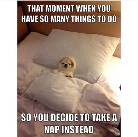 Nap Meme - nap meme 28 images best 25 naps funny ideas on pinterest todays naps witty quotes about