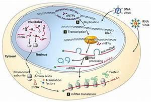 Biostat Biology Basics Md At Master  U00b7 Raphg  Biostat