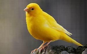 Golden Canary Yellow Sapphire Infinite Intelligence ring
