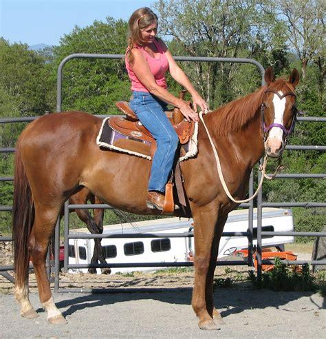 horse bunny she safer saferhorse