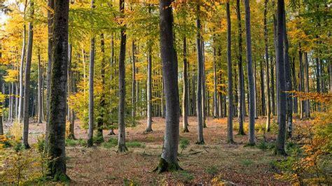 local plant microbe alliances shape global biomes