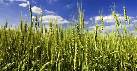 Background Crop Nsw Crop Guides