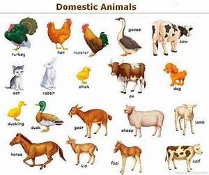 Domestic Animals For Kindergarten