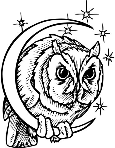 owl  crescent moon coloring page  printable coloring pages
