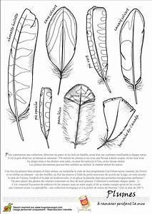 Dessin De Plume Facile : coloriage oiseau legende plumes2 sur ~ Melissatoandfro.com Idées de Décoration