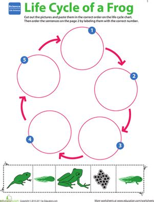 life science learning life cycle of a frog worksheet